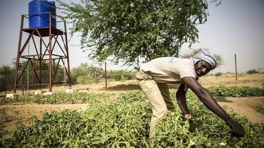 Paysan africain dans son champ pour atteindre son autonomie alimentaire grâce à votre don association contre la famine