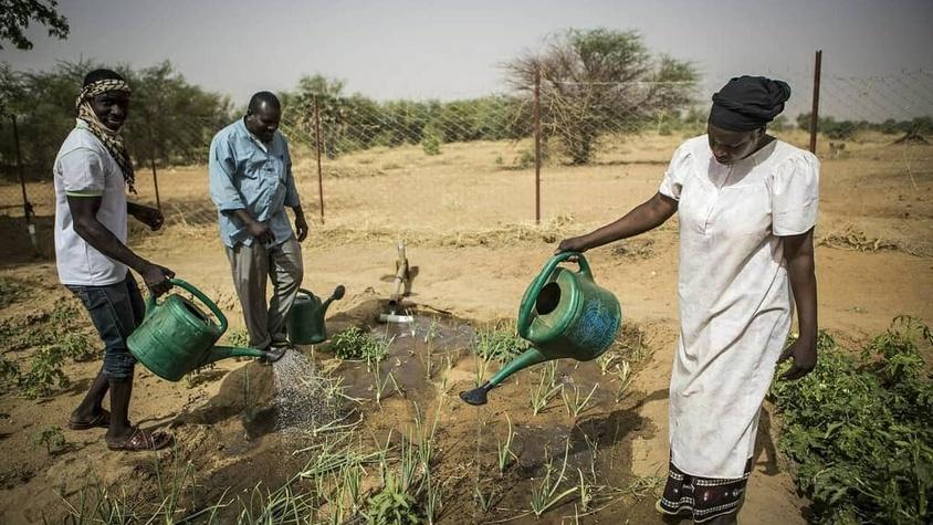 Fermiers africains arrosant leur culture maraîcher pour se nourrir sainement et durablement